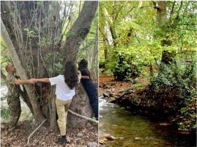 """Ermənilərdən yeni şizofrenik iddia - heç demə, çinar ağacı da """"erməni"""" imiş"""